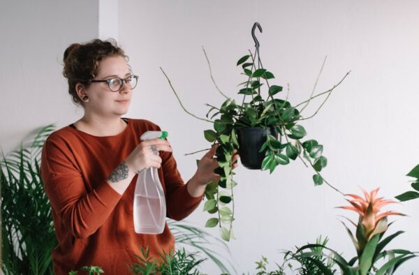 Most common indoor mistakes while planting houseplants