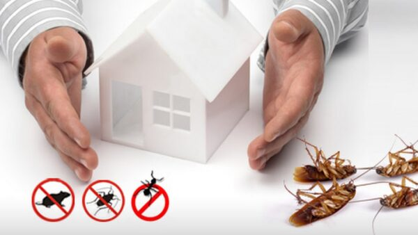 Know the Most Effective Ways of Pest Control