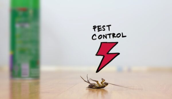 Top 10 Reasons – Why General Pest Control Service is Necessary